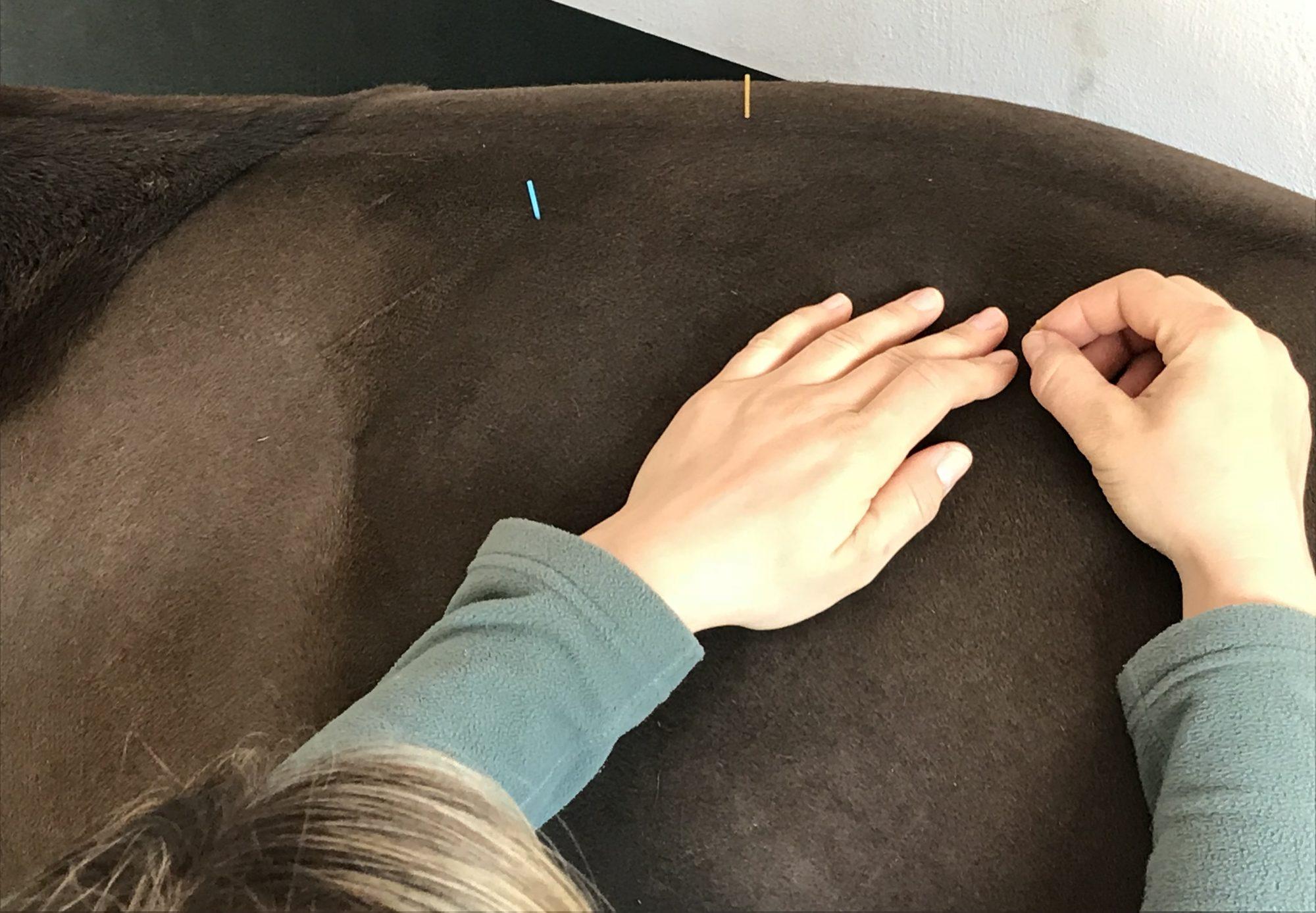 Tierarztpraxis Sina Dierking